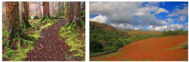United Kingdom Forests